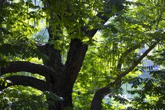 Overgrown tree in a wonderful sunny forest royalty free stock photography