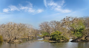Overgrown trees in the ponds Keoladeo National park Stock Photos