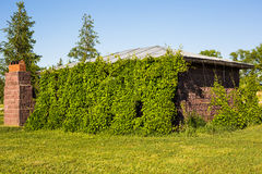 Overgrown Typical Rural house at sunny day Stock Images