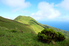 Overgrown volcanic peaks on the island of Sao Jorg Stock Images