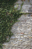 Overgrown wall Stock Photography