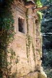 Overgrown wall Stock Image