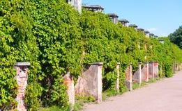 Overgrown wall in Peterhof Palace, Saint Petersburg Stock Image