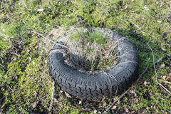 Overgrown wasted tyre Stock Photos