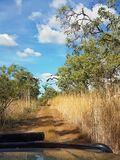 Chasing birds on a 4wd track. An overgrown 4wd track in the outback with black cockatoos flying in front of the car Royalty Free Stock Photography
