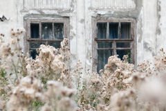 Overgrown weeds window Stock Photography