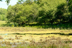 Overgrown wetland Royalty Free Stock Images