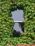 Overgrown Window. A house window overgrown with ivy Stock Images