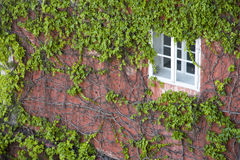 Overgrown window Royalty Free Stock Image