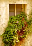 Overgrown Window of Old Building Stock Image