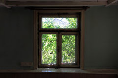 The overgrown window in the old farmhouse Stock Images