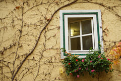 Overgrown window Stock Image