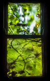 Overgrown Window Royalty Free Stock Images