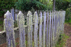 Overgrown wooden garden fence detail, at a farm, Patagonia, Argentina Stock Photo