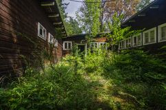 overgrown wooden house stock images