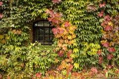 overgrowth Imagen de archivo libre de regalías