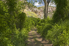 Overgrowth in Cottonwood Canyon Royalty Free Stock Photo