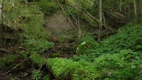 Overgrowth ravine in the forest stock footage