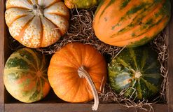 Overhaed closeup of a variety of decorative gourds and pumpkins stock photography
