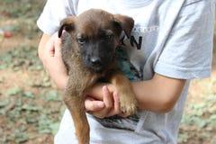 Overhandigt child's holding en het koesteren van een hondpuppy Royalty-vrije Stock Foto