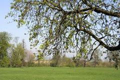 Overhangende boom bij het park Royalty-vrije Stock Foto's
