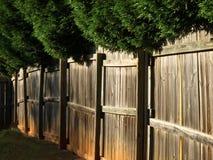 overhanging δέντρα φραγών ξύλινα Στοκ Φωτογραφίες