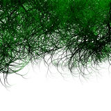 Overhanging Green Tree Background Stock Images