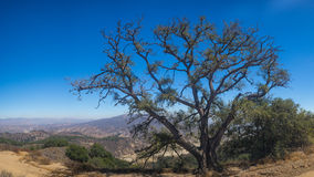 Overhanging Tree on California Mountain Stock Photography