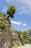 Overhanging tree on rock above the road Royalty Free Stock Image