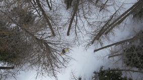 Overhead aerial drone flight establisher over skier man skiing in snowy forest woods.Winter snow in mountain nature. Outdoors.Ski mountaineering activity stock video