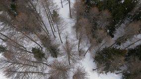 Overhead aerial drone flight establisher over skier man skiing in snowy forest woods.Winter snow in mountain nature. Outdoors.Ski mountaineering activity stock video footage