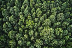 Overhead aerial shot of a thick forest with beautiful trees and greenery