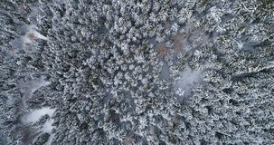 Overhead aerial top view moving over alpine mountain snow covered pine forest woods.Winter outdoor nature scape snowy. Mountains wild establisher.4k drone stock video