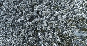 Overhead aerial top view moving toward over alpine mountain snow covered pine forest woods.Winter outdoor nature scape. Snowy mountains wild establisher.4k stock footage