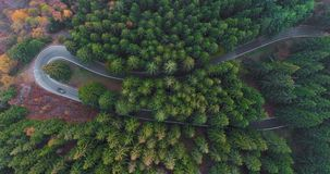 Overhead aerial top view over car travelling on hairpin bend turn road in countryside autumn forest.Fall orange,green. Yellow pine tree woods.Fog Street path stock video