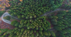 Overhead aerial top view over car travelling on hairpin bend turn road in countryside autumn forest.Fall orange,green. Yellow pine tree woods.Fog Street path stock footage