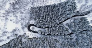 Overhead aerial top view over car travelling on hairpin bend turn road in mountain winter snow covered forest.White pine. Tree woods.Snowy street path stock video