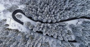 Overhead aerial top view over car travelling on hairpin bend turn road in mountain winter snow covered forest. White pine. Tree woods. Snowy street path stock video