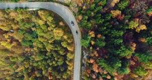 Overhead aerial top view over car travelling on road in colorful autumn forest.Fall orange,green,yellow red tree woods. Mountains street path establisher.4k stock video footage
