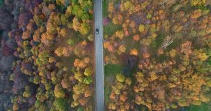 Overhead aerial top view over car travelling on road in colorful autumn forest. Fall orange, green, yellow red tree woods. Mountains street path establisher.4k stock video