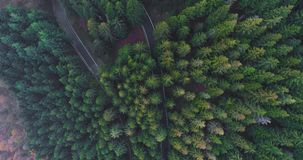 Overhead aerial top view over hairpin bend turn road in countryside autumn forest.Fall orange,green,yellow red pine tree. Woods.Fog Street path establisher.4k stock footage