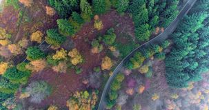 Overhead aerial top view over hairpin bend turn road in countryside autumn forest.Fall orange,green,yellow red pine tree. Overhead aerial top view over hairpin stock video
