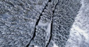Overhead aerial top view over hairpin bend turn road in mountain snow covered winter forest. White pine tree woods. Snowy. Street path establisher.4k drone stock video