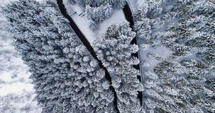 Overhead aerial top view over hairpin bend turn road in mountain snow covered winter forest.White pine tree woods.Snowy. Street path establisher.4k drone flight stock video