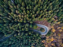 Overhead aerial top view over hairpin turn road bend in countryside autumn pine forest.Fall orange,green,yellow,red tree. Woods.Mountain curve street path royalty free stock photos