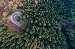 Overhead aerial top view over hairpin turn road bend in countryside autumn pine forest.Fall orange,green,yellow,red tree royalty free stock photography