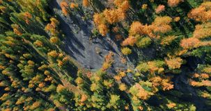 Overhead aerial top view over orange and red larch tree forest woods in sunny autumn.Europe Alps outdoor colorful nature. Scape mountains wild fall establisher stock video footage