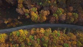 Aerial of car driving through sunny autumn forest. stock video footage