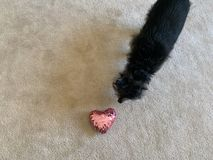 Dog Smelling a Heart stock images