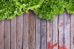 Overhead Border View of Lettuces on Market Table Royalty Free Stock Photos